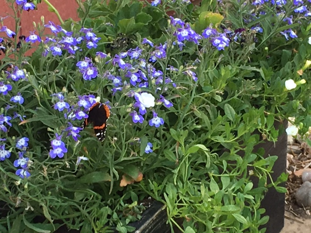 Butterfly_purple flowers