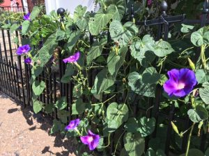 Morning Glories 2