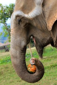 elephants_pumpkin